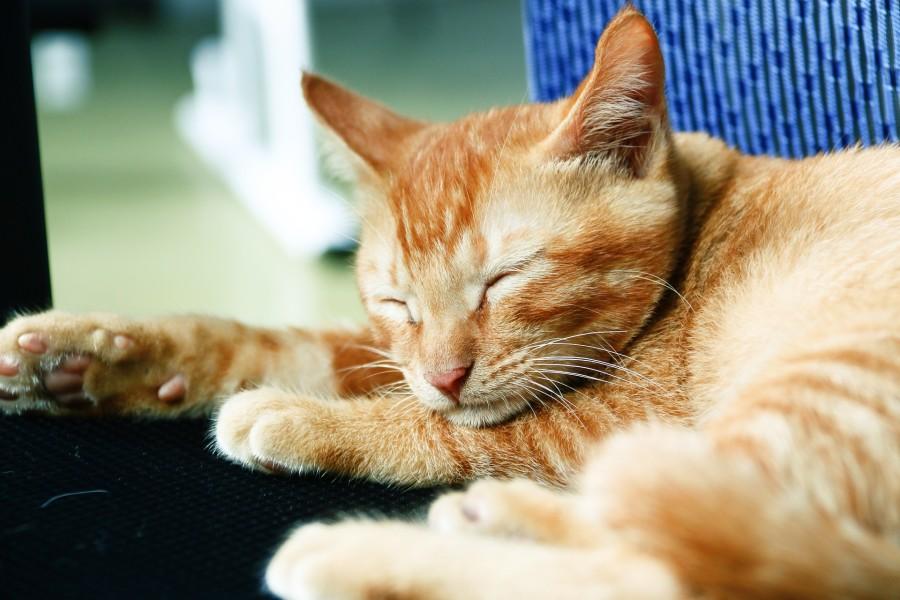 cat-1311002_1920